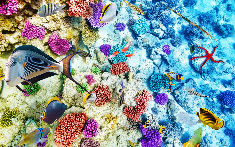 статье картинки дна океана с рыбками примета